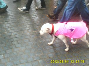 Thumbnail Liverpool Pride 4th August 2012 Photo 7 Dog in pink